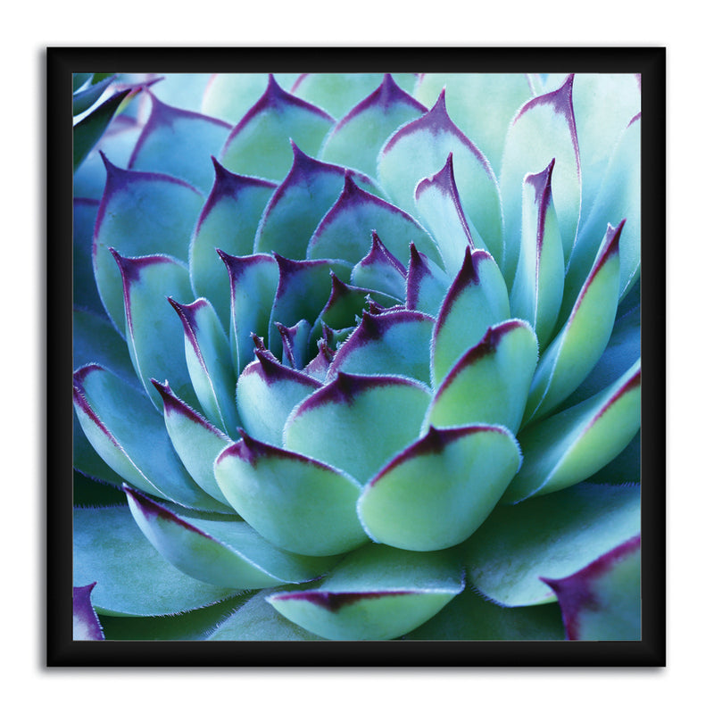Colorful Cactus Canvas Art by Anon - FairField Art Publishing