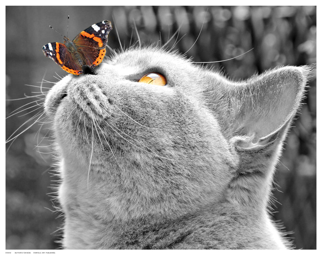 Butterfly on Nose by Anon - FairField Art Publishing