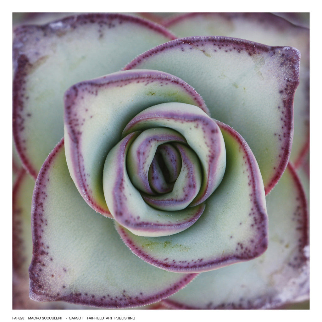 Macro Succulent by Garsot - FairField Art Publishing