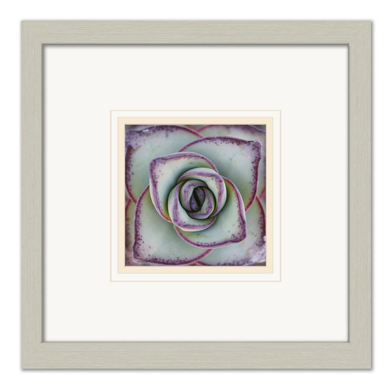 Macro Succulent -  Framed Matted