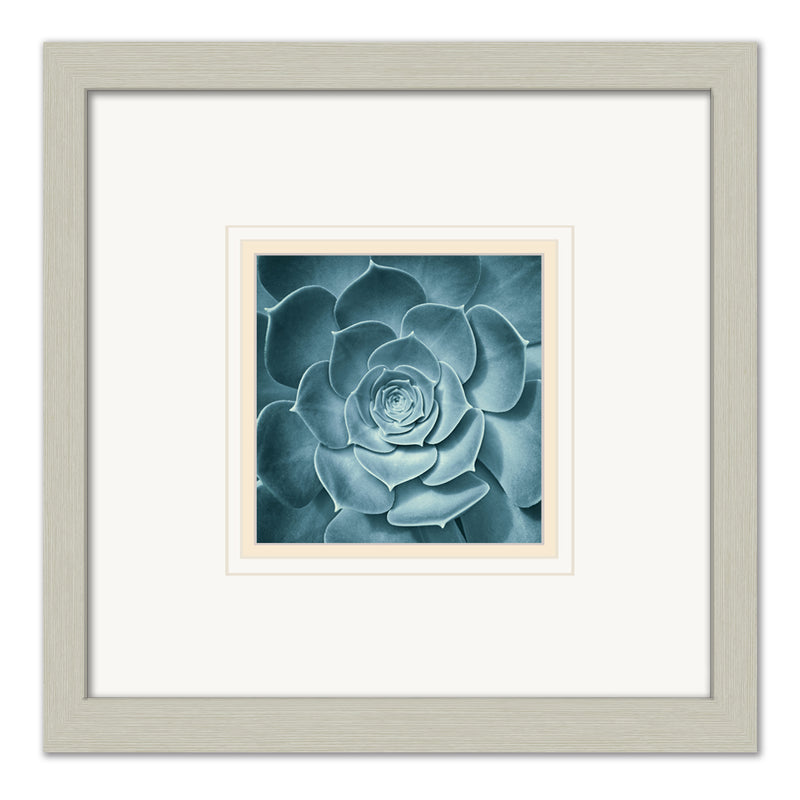 Symmetrical Flora -  Framed Matted Framed Matted by Anon - FairField Art Publishing