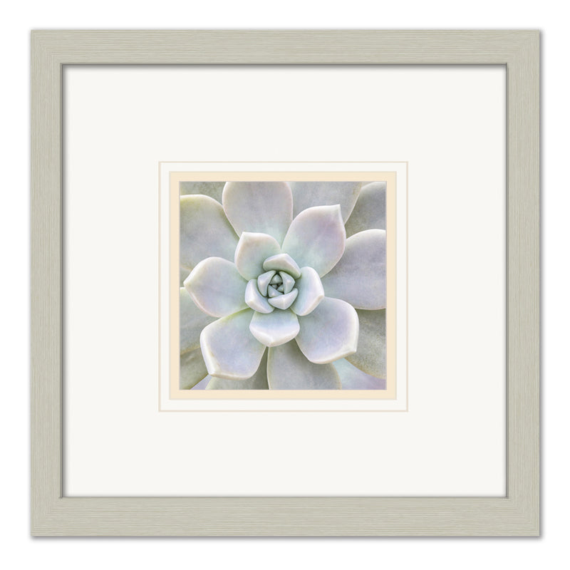Aeonium Flower Framed Art by Anon - FairField Art Publishing