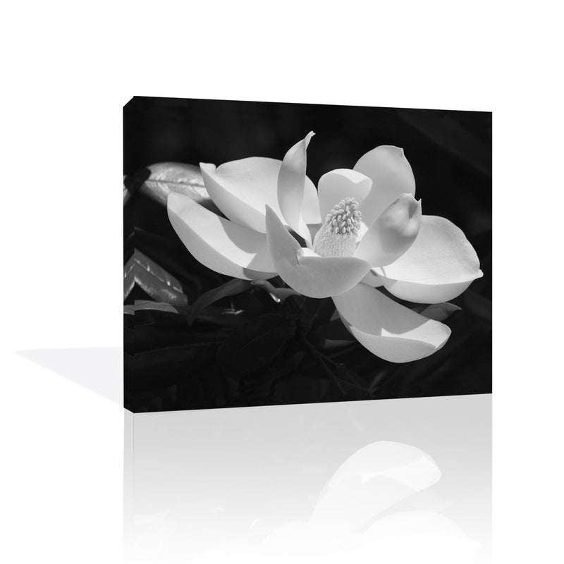 Magnolia Flower Canvas Art by Anon - FairField Art Publishing