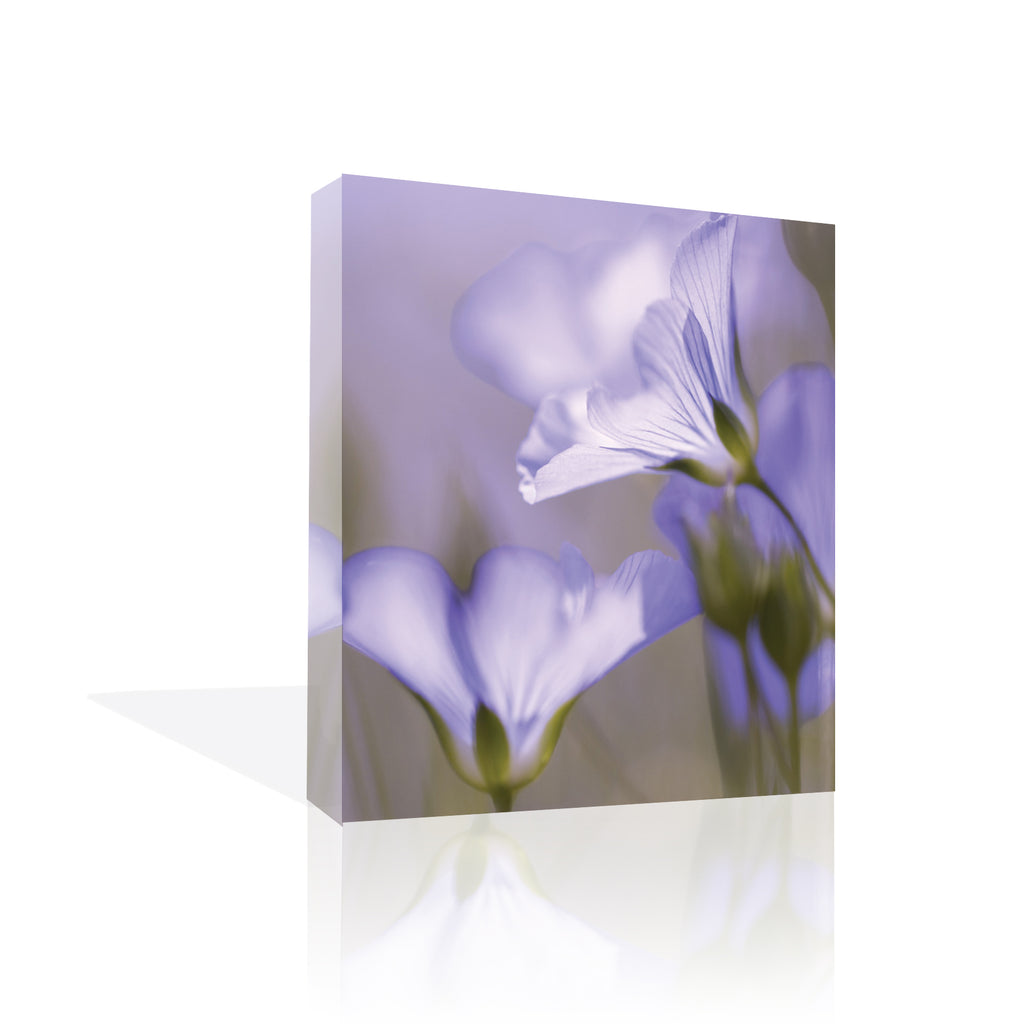 Fleur Mauve Canvas Art by Anon - FairField Art Publishing