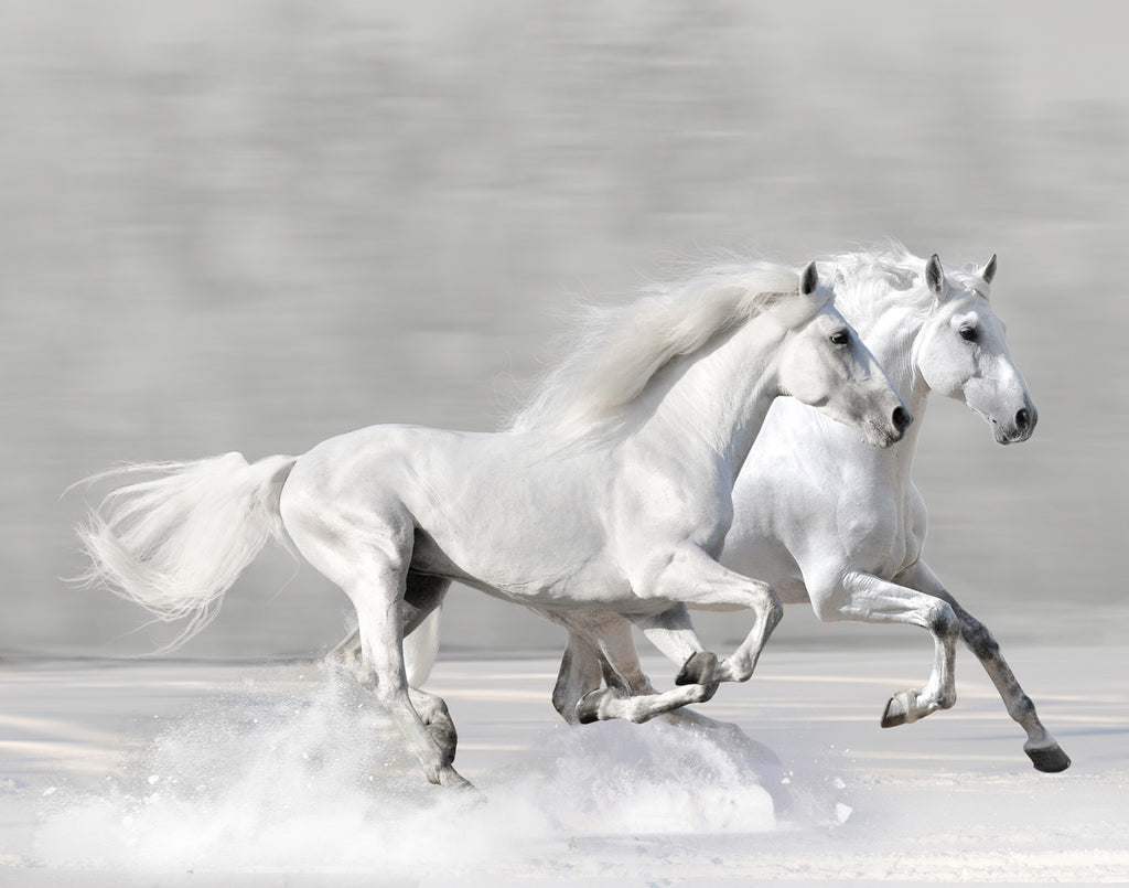 Winter Gallop Posters by V. Makarova - FairField Art Publishing
