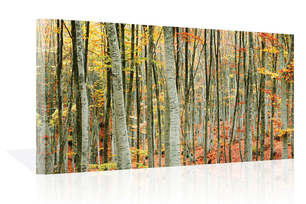 Beech Forest Canvas Art by Mavroudakis - FairField Art Publishing