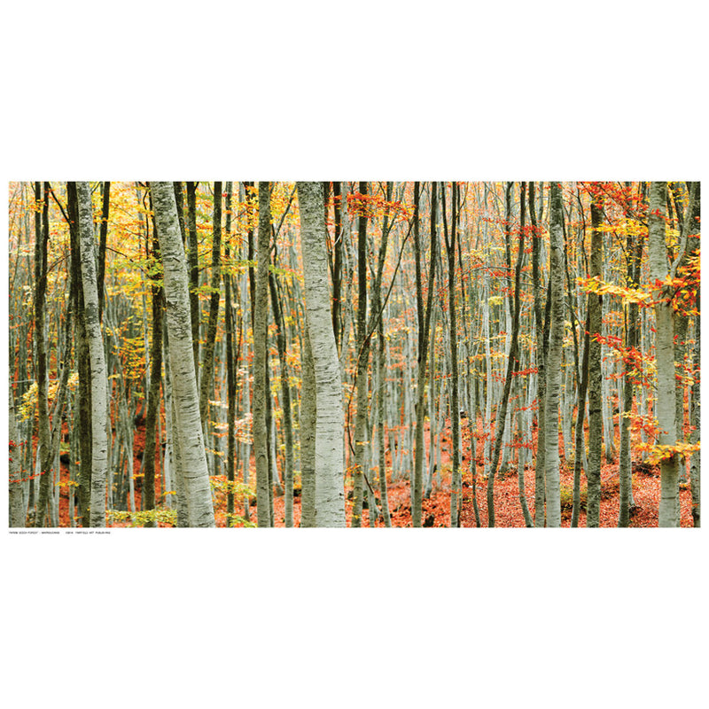 Beech Forest by Mavroudakis - FairField Art Publishing