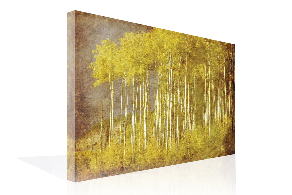 Autumn Aspen Forest Canvas Art by Anon - FairField Art Publishing