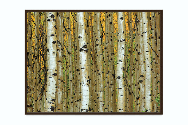 Golden Aspen Canvas Art by Adolphson - FairField Art Publishing