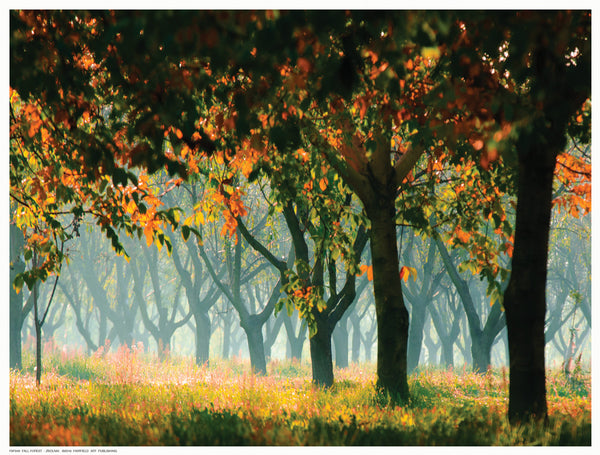 Fall Forest Posters by Zsolnai - FairField Art Publishing