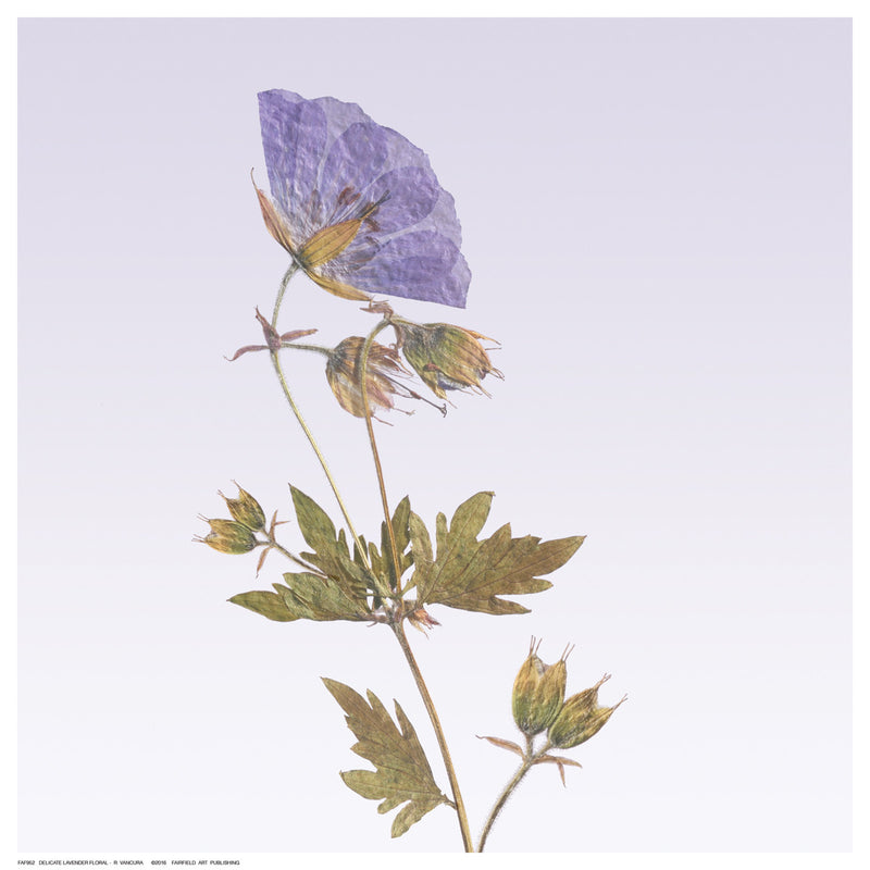 Delicate Lavender Floral Posters by R. Vancura - FairField Art Publishing