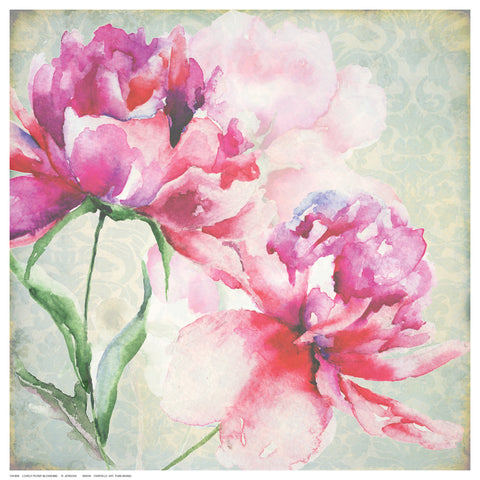 Lovely Peony Blossoms