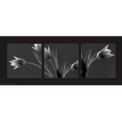 Tulip Trio Posters by Dennis Frates - FairField Art Publishing
