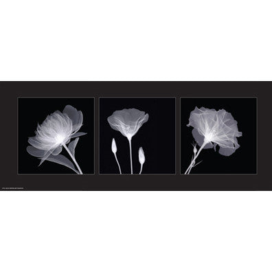 Sheer B&W Floral Trio Posters by Anon - FairField Art Publishing