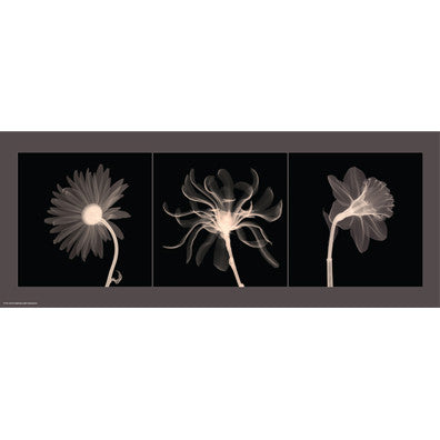 Translucent Floral Trio Posters by Anon - FairField Art Publishing