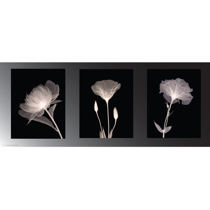 Champagne Floral Trio Posters by Anon - FairField Art Publishing