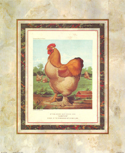 Buff. Cochin Cock Posters by J.W. Ludlow - Cassells Poultry Book - FairField Art Publishing