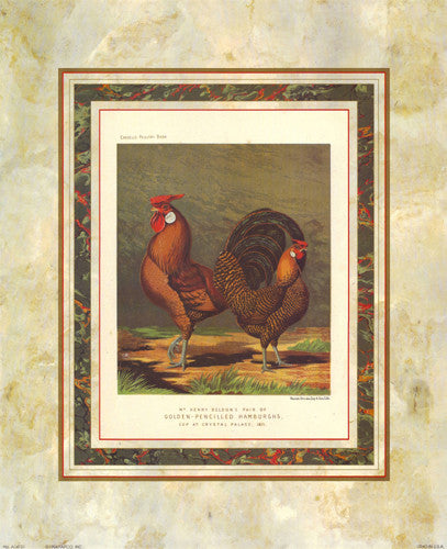 Golden Pencilled Hamburghs by J.W. Ludlow - Cassells Poultry Book - FairField Art Publishing