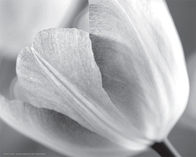 Tulip I Posters by Dennis Frates - FairField Art Publishing