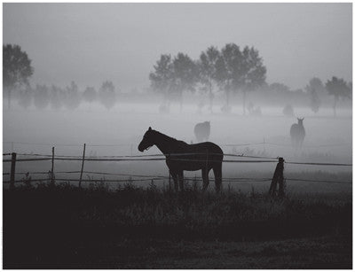 Grazing in the Mist Posters by Anon - FairField Art Publishing
