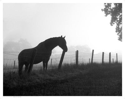 Morning Pasture by Anon - FairField Art Publishing