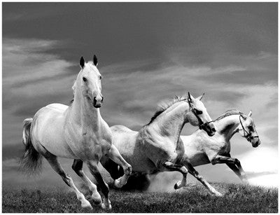 White Stallions Posters by Anon - FairField Art Publishing