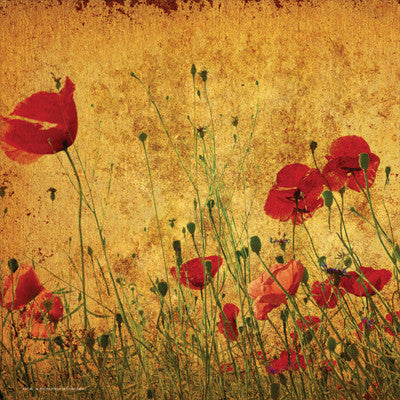 Field of Poppies Floral Art by Anon - FairField Art Publishing