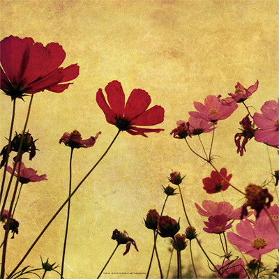 Country Poppies Floral by Anon - FairField Art Publishing