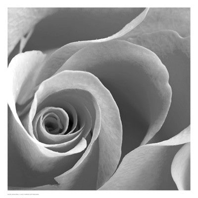 Rose Spiral II Floral by Anon - FairField Art Publishing
