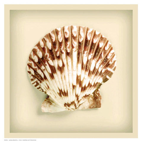 Radial Seashell