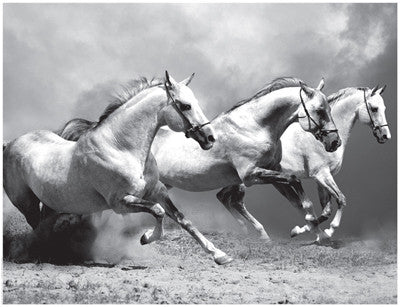 White Stallions II Posters by Anon - FairField Art Publishing