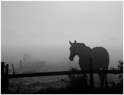 Grazing in the Mist II by Anon - FairField Art Publishing