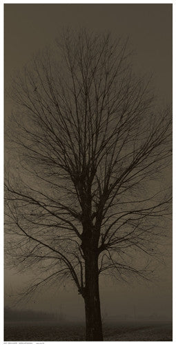 Tree Silhouette Posters by Anon - FairField Art Publishing