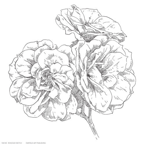 Rose Bud Sketch Floral by Anon - FairField Art Publishing