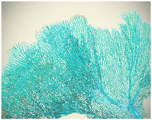 Teal Coral Posters by Anon - FairField Art Publishing