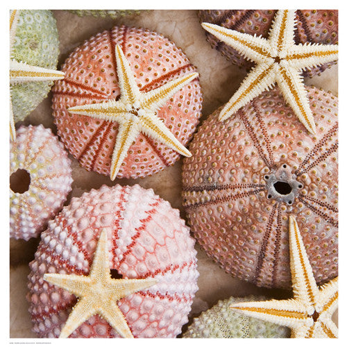 Starfish & Sea Urchins Posters by Bramwell - FairField Art Publishing