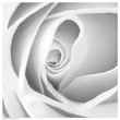 Rose Swirl I Floral by Anon - FairField Art Publishing