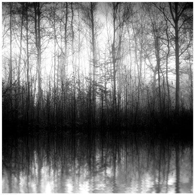 Forest Mist by Anon - FairField Art Publishing
