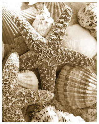 Starfish and Shells Posters by Anon - FairField Art Publishing
