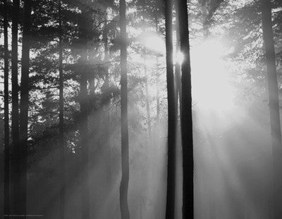 Light Through the Trees I by Anon - FairField Art Publishing