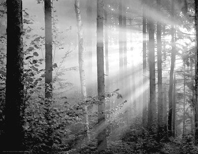 Light Through the Trees II by Anon - FairField Art Publishing
