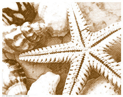 Starfish Impression Posters by Anon - FairField Art Publishing
