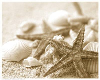 Starfish and Seashells Posters by Anon - FairField Art Publishing