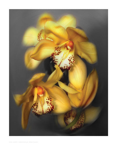Cymbidium Orchid Yellow by Igor Maloratsky - FairField Art Publishing
