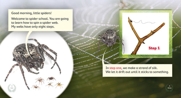 Spider School: How to Spin a Web (Level 14)