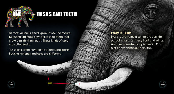 Tusks and Teeth 6-pack (Level 17)