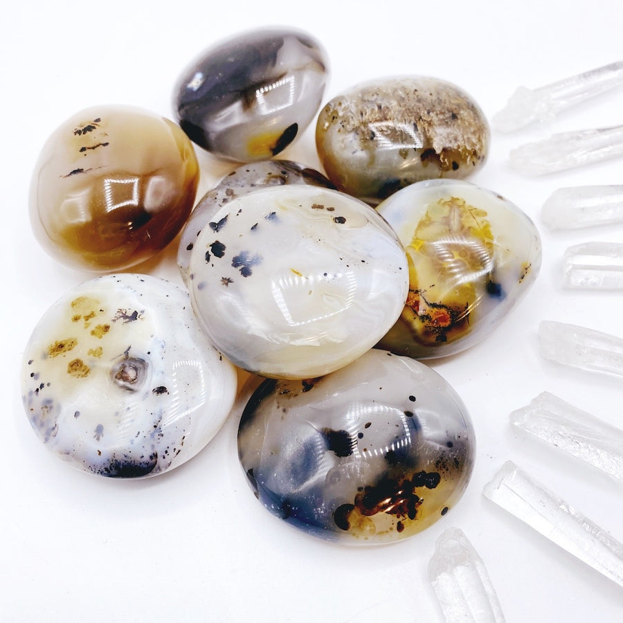 Dendritic Agate Palm Stones