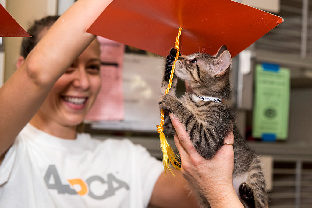 Pomp and Circumstance: 1,500+ Kittens Graduate from the ASPCA Kitten Nursery, November 10, 2015