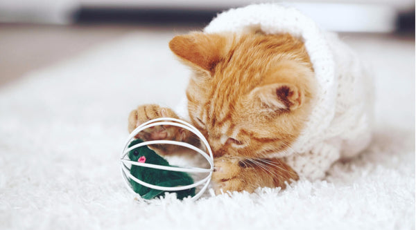 DIY Cat Toys You Can Make At Home Today!