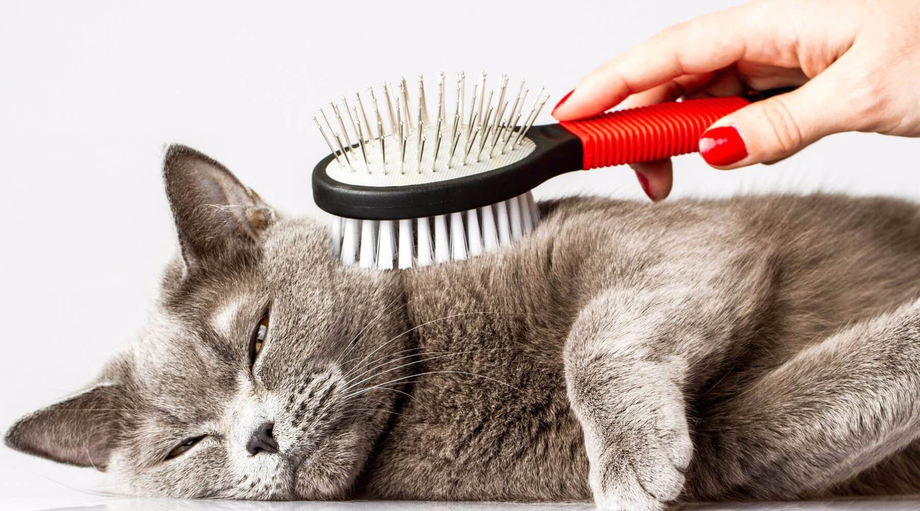 Grooming Tips for a Happy & Healthy Cat